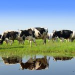Fonterra To Acquire 20% Stake In PE-Backed Beingmate
